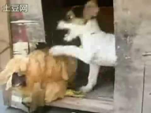 หมาหยอกไก่