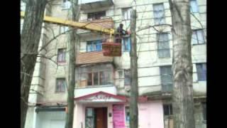 В Рубежном «подстригают» деревья