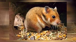 10 Najkrócej żyjących zwierząt świata
