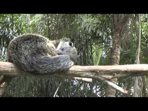Australia_Brisbane_Alma Park ZOO