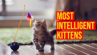 Top 10 Intelligent Cat Breeds/ Kittens To keep As Pet/ All Cats