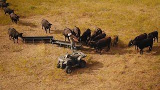 Beef Loving Chefs: Ranger Cattle