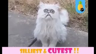 ♥  WEIRD & CUTE THINGS CATS DO COMPILATION ♥  Nov 24 || A Funny Cat Compilation ♥