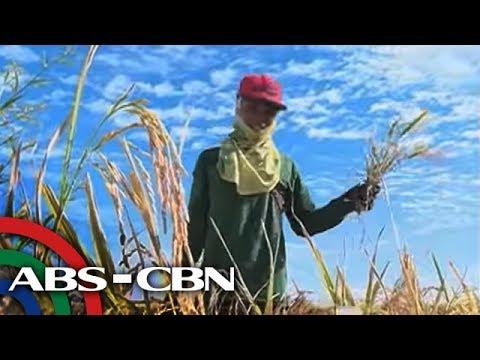 TV Patrol: Mga Pinoy na magsasaka, 'talo' sa pag-angkat ng bigas ng NFA thumbnail