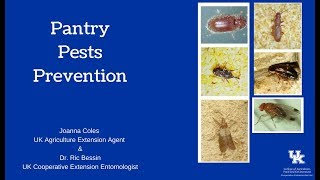 Pantry Pests Prevention