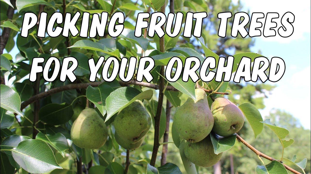 Ing Fruit Trees From Bob Wells Nursery