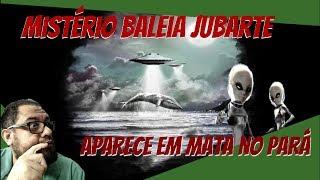 Misterio Baleia Jubarte morta é encontrada em área de mata no Pará!!!