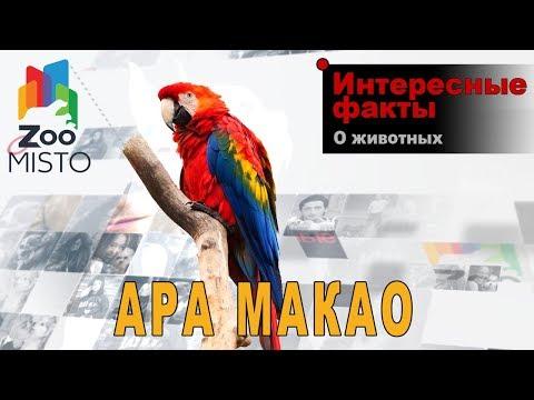 Ара макао - Интересные факты о виде | Вид попугая ара макао