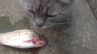 Кот Серко И Собачка Рыжик