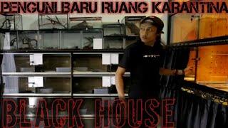 PENGHUNI BARU BLACK HOUSE | KURUS DENGAN LUKA DI KEPALA
