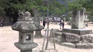 Insel Miyajima - Konishi Koi Farm - Japan Koi Siess - Shinkokai 9