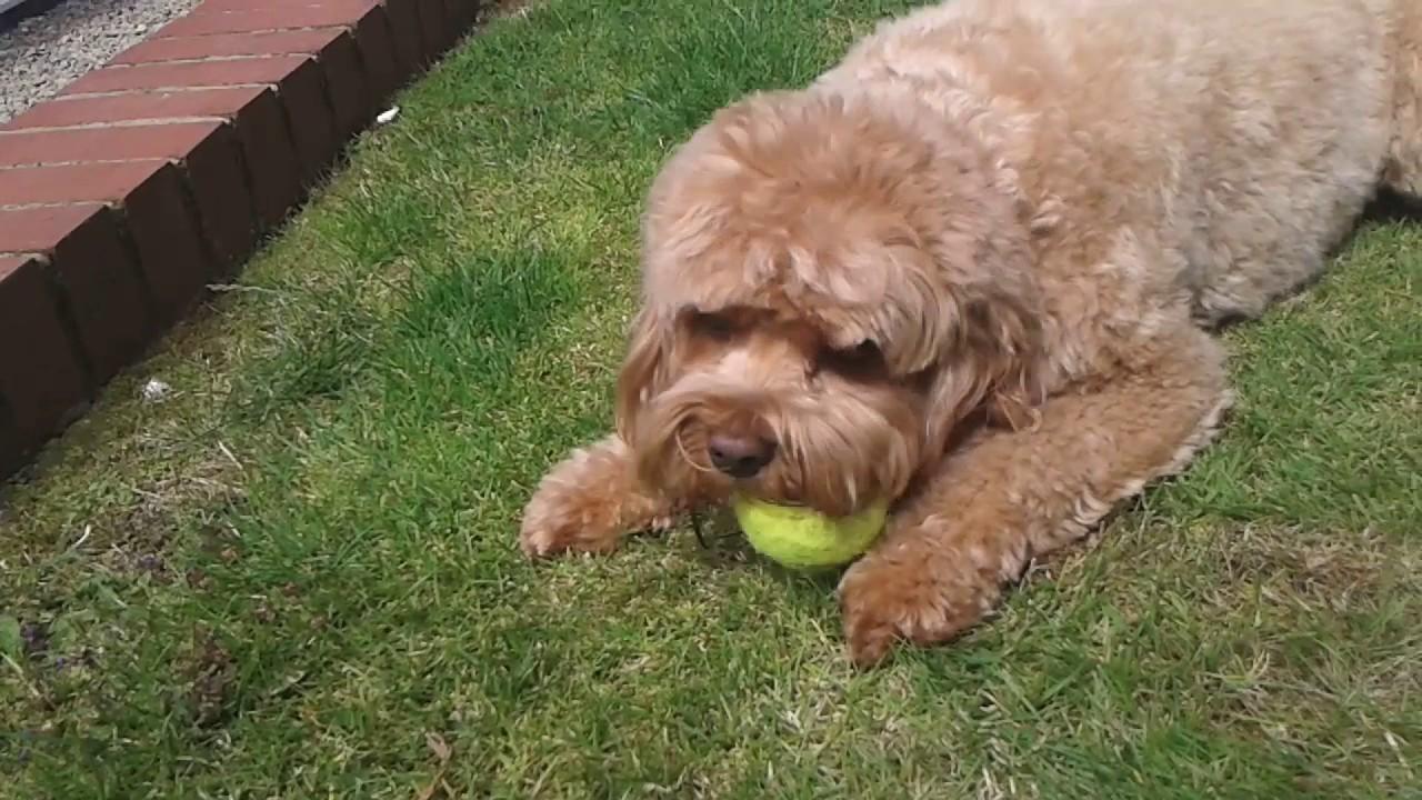 Me and my mom\'s boyfriend\'s dog lotti! Fetch in the garden. - YouTube