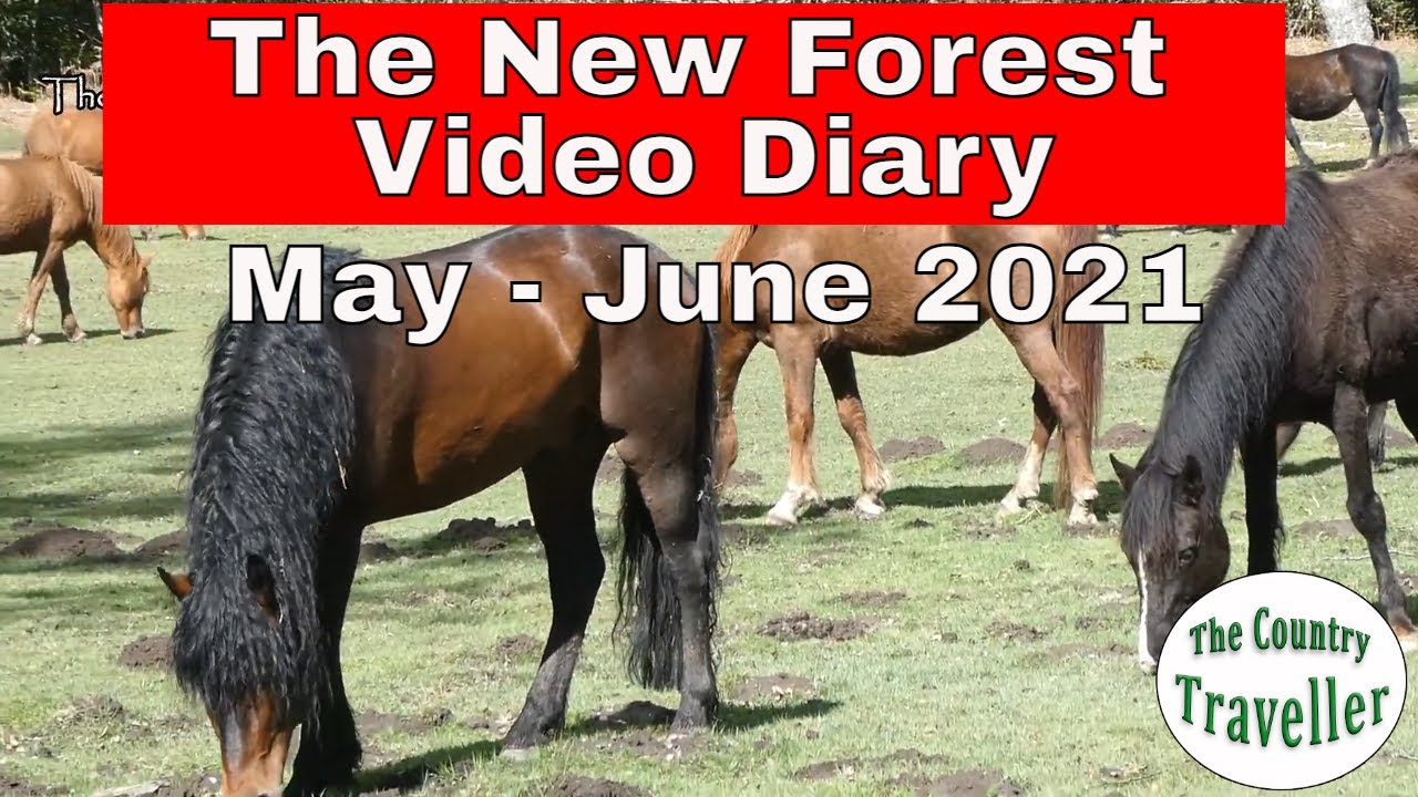 The New Forest Video Diary May - June 2021
