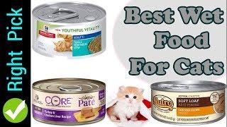 CAT FOOD : 5 Best Wet Food For Cats | Best Wet Cat Food 2018