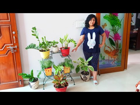 Care of Indoor Plants    How to Grow and Care Indoor Plants for Beginners    Fun Gardening