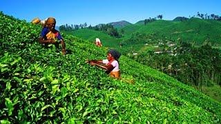 Ooty Tea Factory Dodabetta Tea Museum India - How Tea is Processed