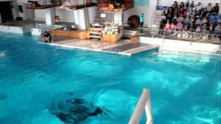 Дельфинарий Набережные Челны.MOV