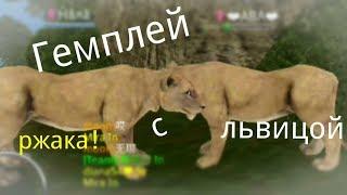 Гемплей с львицой 😎 Но сначала будет кое-что важное ☺ Wild animals online! Чит.опис
