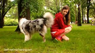 How to Train Your Dog to Follow You - Online Dog Training