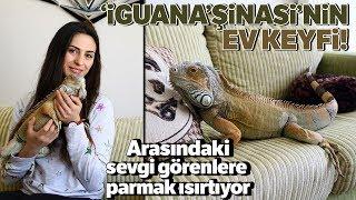 Ankaralı Hayvansever Dev İguana İle Birlikte Yaşıyor