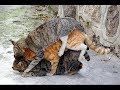 AMAZING CATS HOW THEY ARE MATING!!