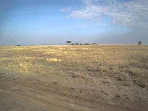 The Serengeti - Tanzania