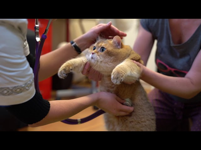 Veterinary doctor and Hosico