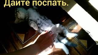 Кот говорит отойди я сплю. Милое видео ( 4 серия )