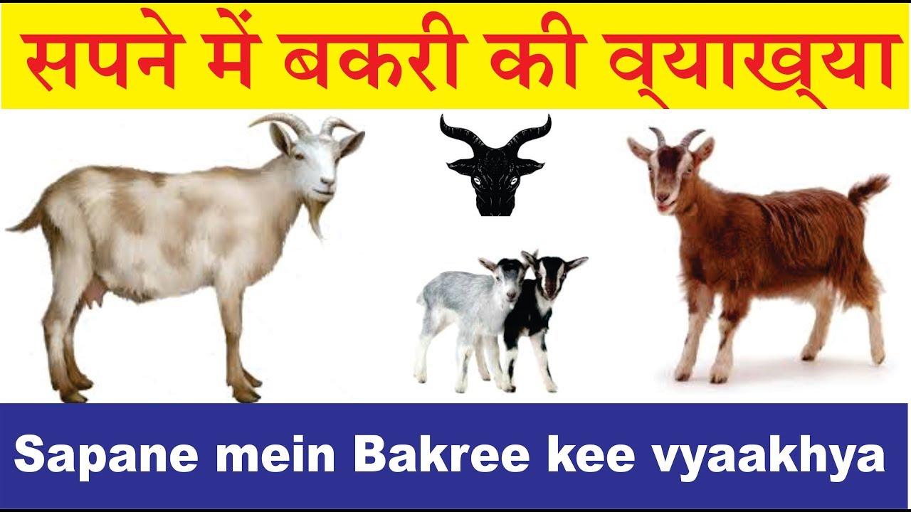 सपने में बकरी की व्याख्या  interpretation of goat in dream  sapane mein  bakaree kee vyaakhya