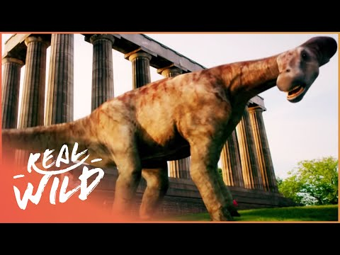 Dinosaur Britain - Episode 2 of 2 [Natural History Documentary] - Wild Things