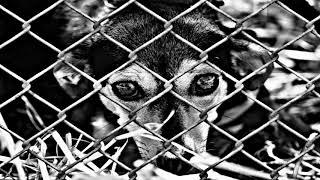BASE DE RAP   ANIMAL   HIP HOP BEAT INSTRUMENTAL ( PROD. IVAJ)