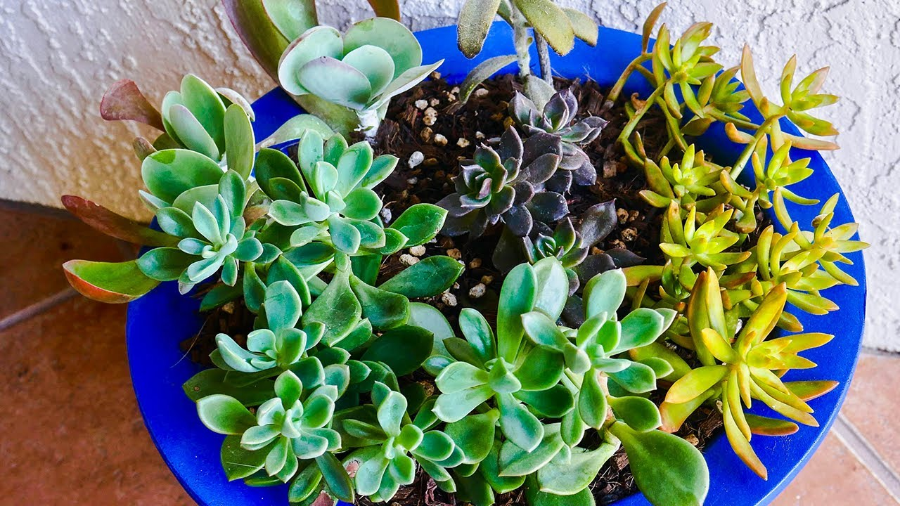 how to transplant succulents in pots joyusgarden youtube. Black Bedroom Furniture Sets. Home Design Ideas