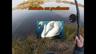 Рыбалка на реке Сосьва Лебедь на озере Перелёт утки