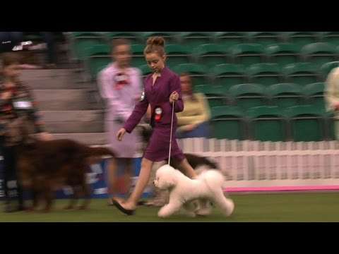 UK Junior Handler of the Year 2014 - The Final