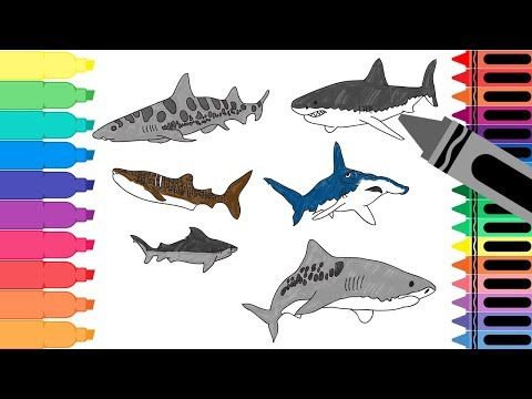 How To Draw Sharks - Drawing Sea Animals - Coloring Pages For Kids | Tanimated Toys
