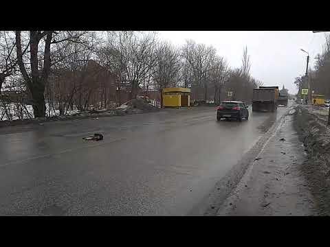 Собирает трупы животных в Сызрани