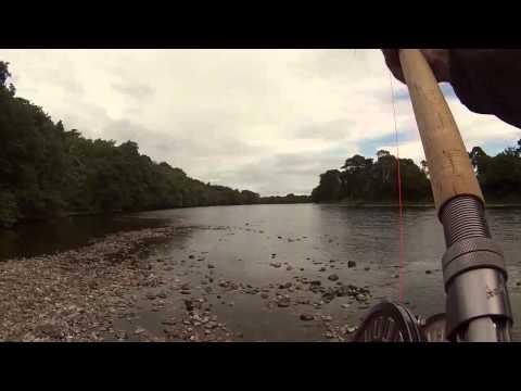 salmon, river ness, dochfour.