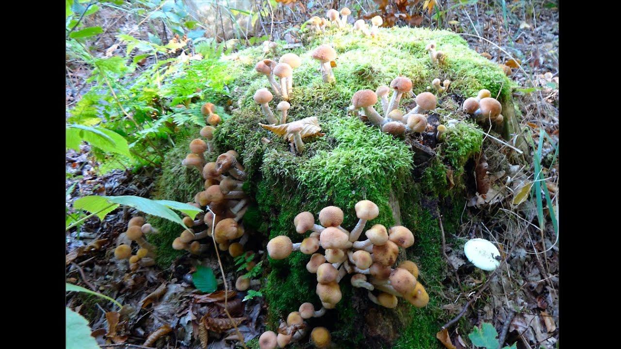 грибы в лесу картинка