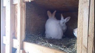 Брачные игры кроликов / крольчиха в сильной охоте!!