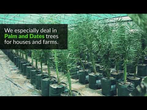 The Gulf's Biggest Dates And Palms Nurseries - Green Coast Nurseries