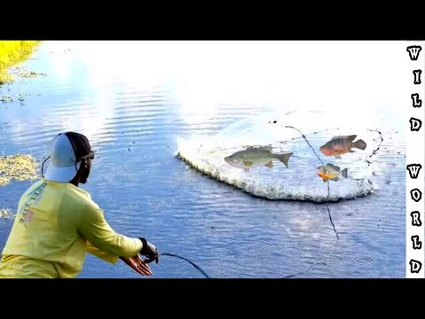 cast-netting-for-colorful-bait