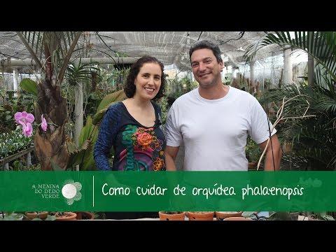 Como Cuidar de Orquídea Phalaenopsis com Reinaldo Ilaci
