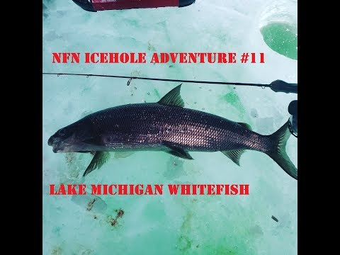 NFN Icehole Adventure #11 Shoreline Whitefish Ice Fishing 2019 (Bay Of Green Bay) Wisconsin