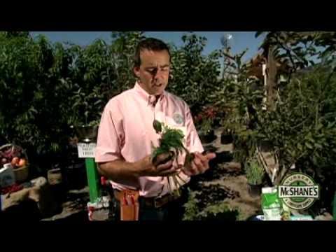 How To Start An Edible Garden