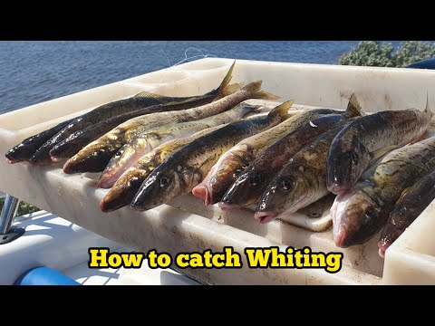 How To Catch & Cook CRAPPIE (Kayak Fishing) from YouTube · Duration:  35 minutes 41 seconds