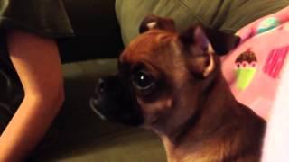 Пес смотрит