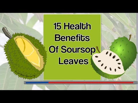 15 Health Benefits Of Soursop Leaves
