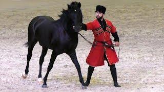 Удар копытом сбил его с ног! Кабардинская порода лошадей #Иппосфера /Kabardian horse #Hipposphere