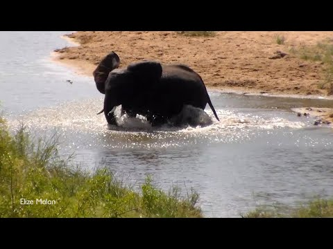 Baby Elephant Splash Around In Water