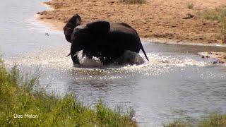 Baby Elephant Splash Around In Water